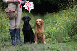 Louie Robertson, Troddenmills into the dark of Mitforton, Bedgebrook Scrumptious, Gundog trainer, Labrador,
